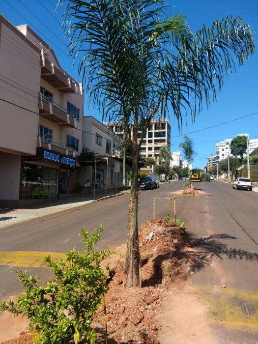 Prefeitura de Xanxerê inicia plantio de coqueiros na La Salle